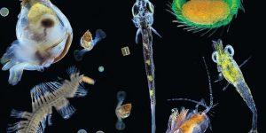 Планктон производит 50% всего кислорода на планете