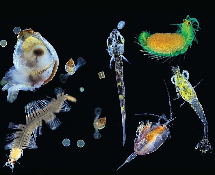 Планктон является ключевым источником жизни на Земле