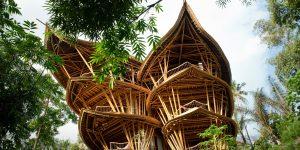 Экологичные дома из бамбука Ibuku