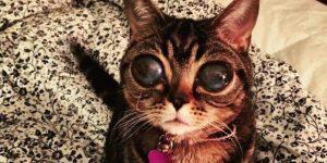 Матильда— инопланетная кошка