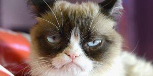 Сердитый кот попадет в музей мадам Тюссо