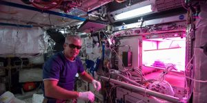 Астронавты съели выращенный на орбите салат