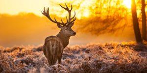 Природа онлайн: животный мир в прямом эфире