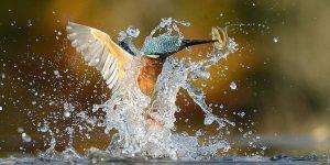 Идеальное фото зимородка
