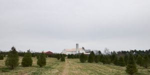 Рождественская ферма или где взять елку
