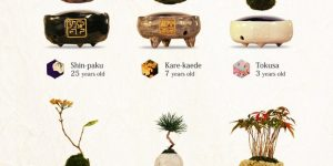 Air Bonsai— проект парящих в воздухе деревьев бонсай