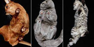 Андрюс Бурба и его  «Кошки. Вид снизу»