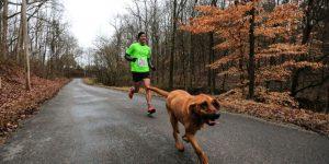 Собака случайно пробежала полу-марафон, заняв седьмое место
