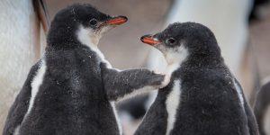 Подборка фотографий пингвинов в честь Penguin Awareness Day