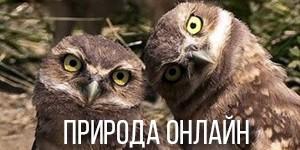 Природа онлайн