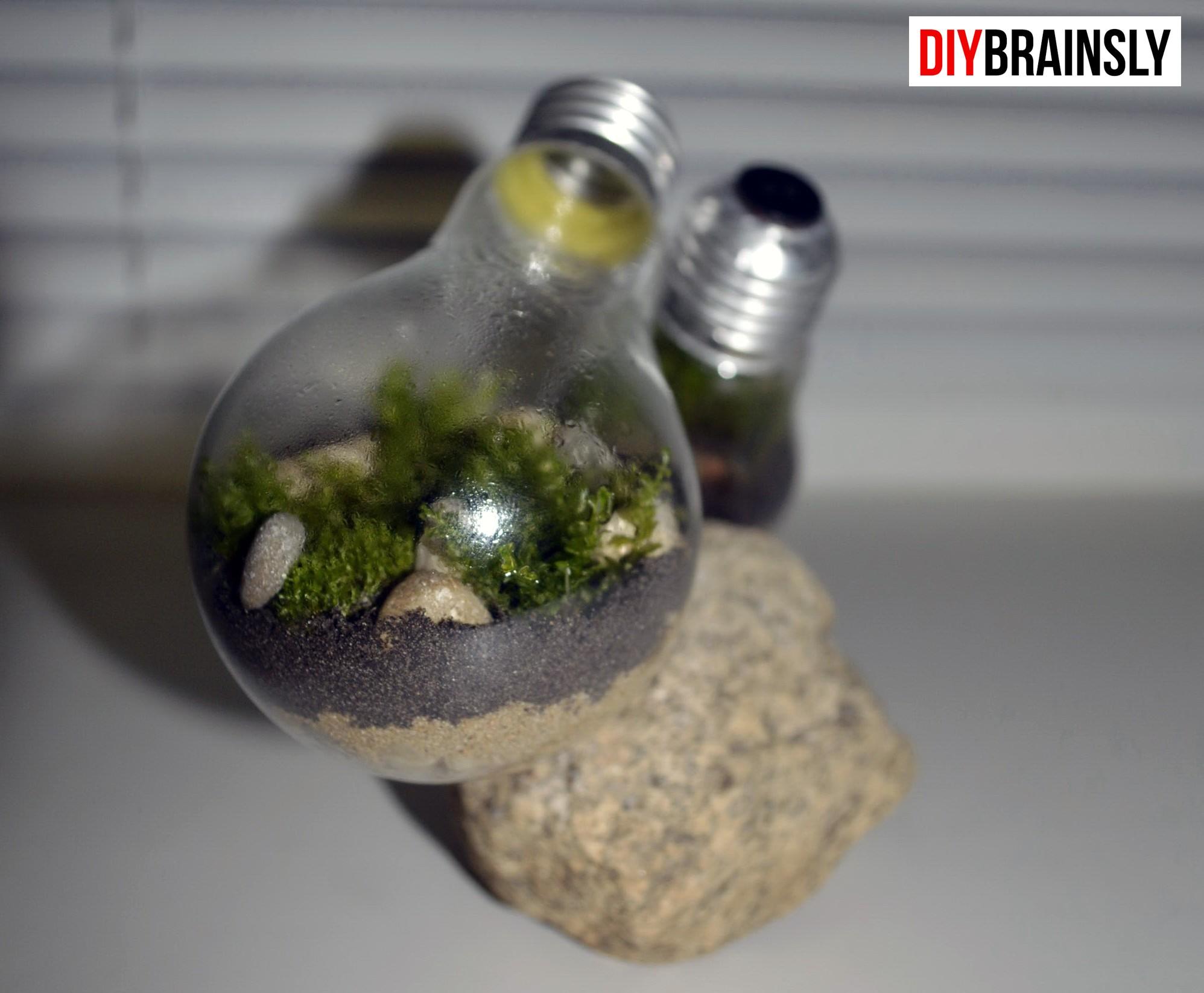 DIY. Экосистема в лампочке 12