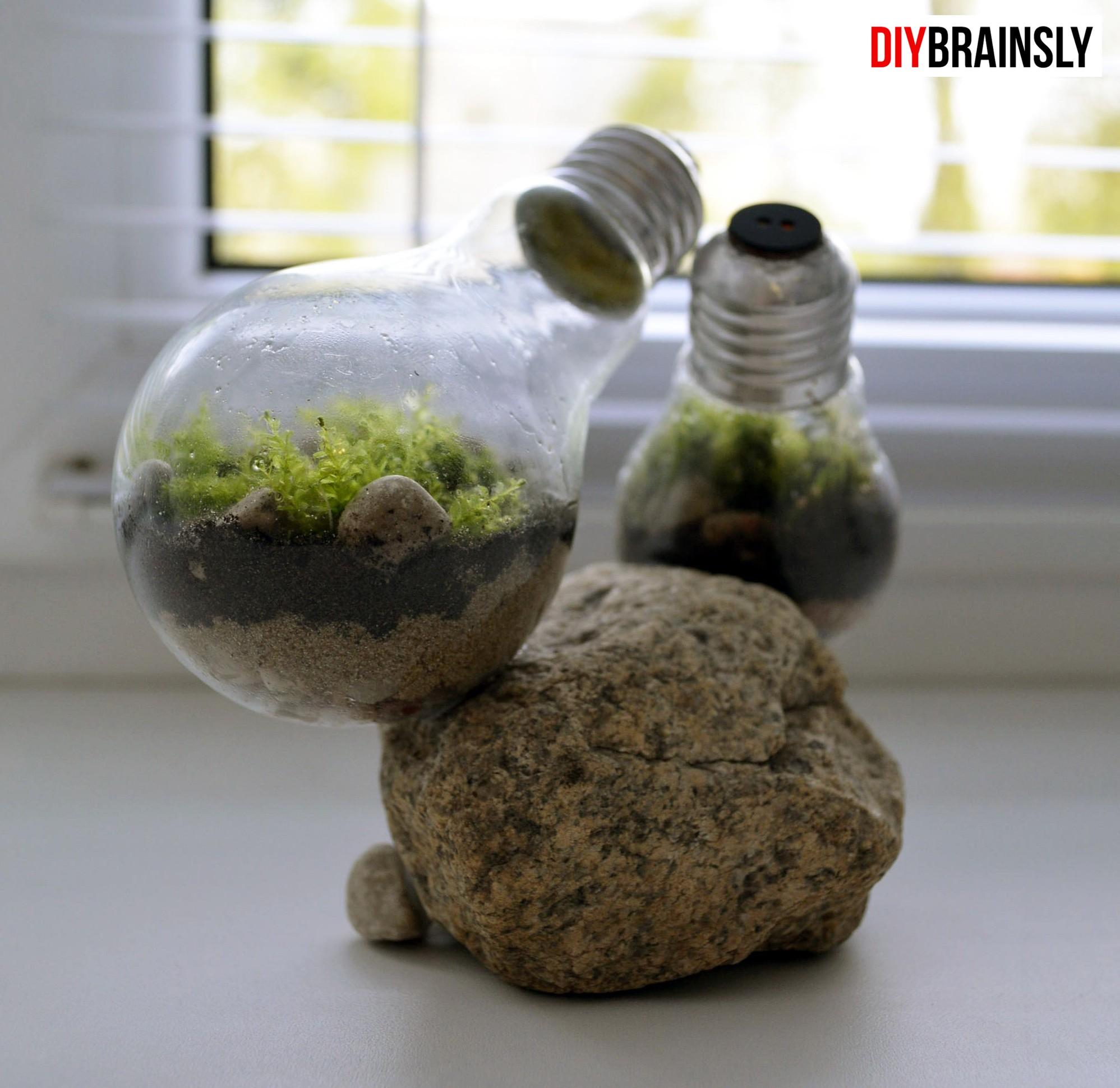 DIY. Экосистема в лампочке 14