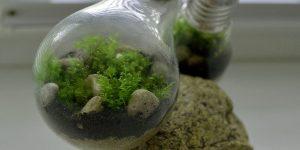 DIY. Экосистема в лампочке