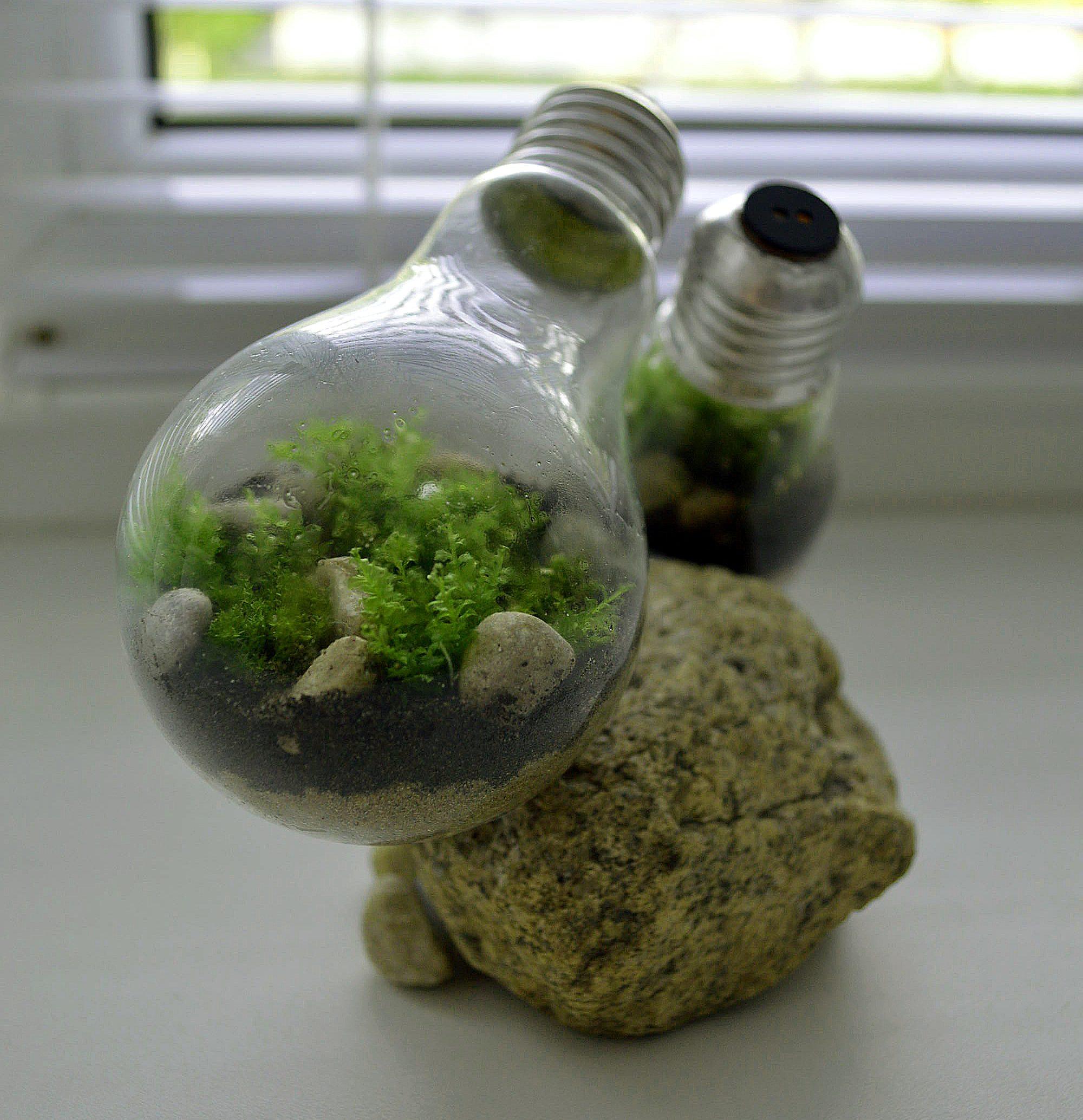 Отсадник для мальков своими руками из пластиковой бутылки 7