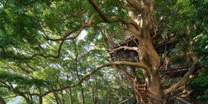 Кафетерий «Птичье гнездо» от Хироши Накомура